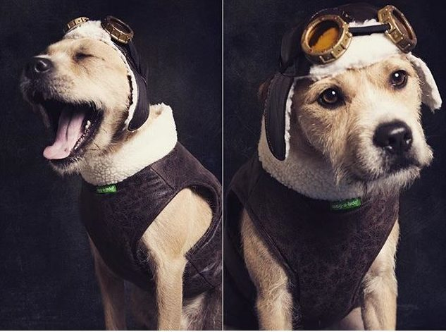 & Aviator Dog Costume