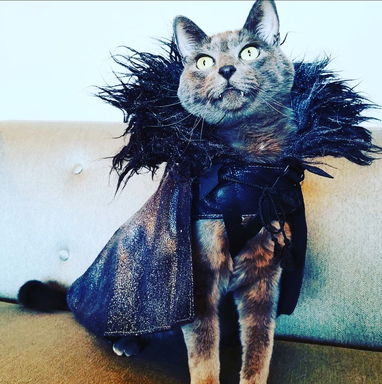 Game Of Thrones Costumes For Cats The Halloween And Makeup